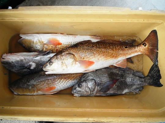 catching the big fish pdf